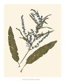 Pressed Botanical IV