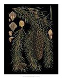 Dramatic Conifers III