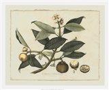 Delicate Botanical I
