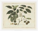 Delicate Botanical III