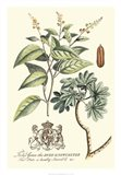 Imperial Foliage IV