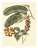 Foliage, Flowers & Fruit IV