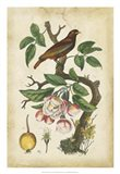 Antique Bird in Nature I