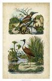 Avian Sanctuary II