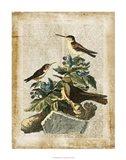 Antiquarian Birds IV