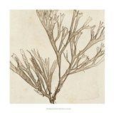 Brilliant Seaweed VII