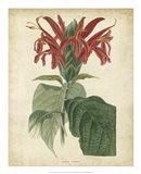 Tropical Floral V