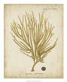 Esper Antique Coral IV