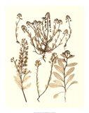 Sepia Nature Study III