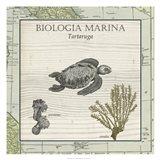 Biologia Marina IV