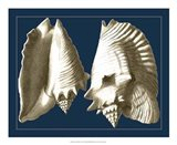 Conch Shells on Navy I