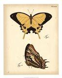 Butterfly Profile II