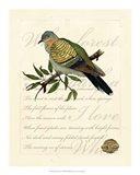 Romantic Dove I