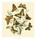 Butterfly Gathering I