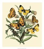 Butterfly Gathering IV