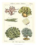 Coral Classification II