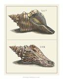 Seashell Menagerie II