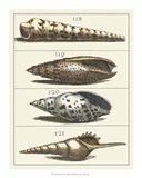 Seashell Menagerie III