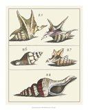 Seashell Menagerie IV