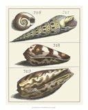 Seashell Menagerie V