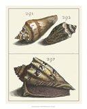 Seashell Menagerie VI