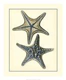 Antique Blue Starfish II