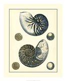 Antique Blue Nautilus
