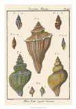Fuseau Shell pl. 426