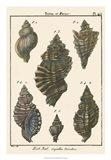 Triton Shell pl. 415