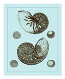 Tinted Shells on Aqua I