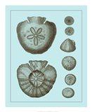 Tinted Shells on Aqua III