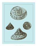 Tinted Shells on Aqua IV