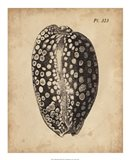 Vintage Diderot Shell II