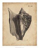Vintage Diderot Shell III