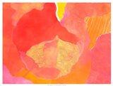 Cabbage Rose II