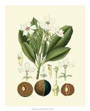 Botanical Glory IV