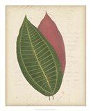 Textured Leaf Study I