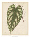 Textured Leaf Study II