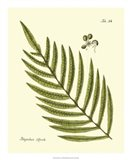 Antique Fern I