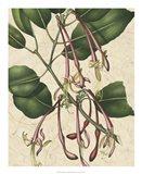 Botanic Beauty I