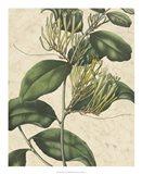 Botanic Beauty IV