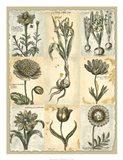 Botanical Patchwork II