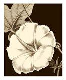 Glorious Blooms II