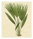 Bourbon Palm