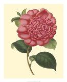 Camellia Garden I