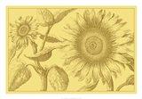 Golden Sunflowers I