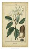 Vintage Turpin Botanical I