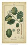Vintage Turpin Botanical III