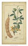 Vintage Turpin Botanical VIII