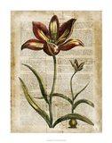 Antiquarian Tulips I